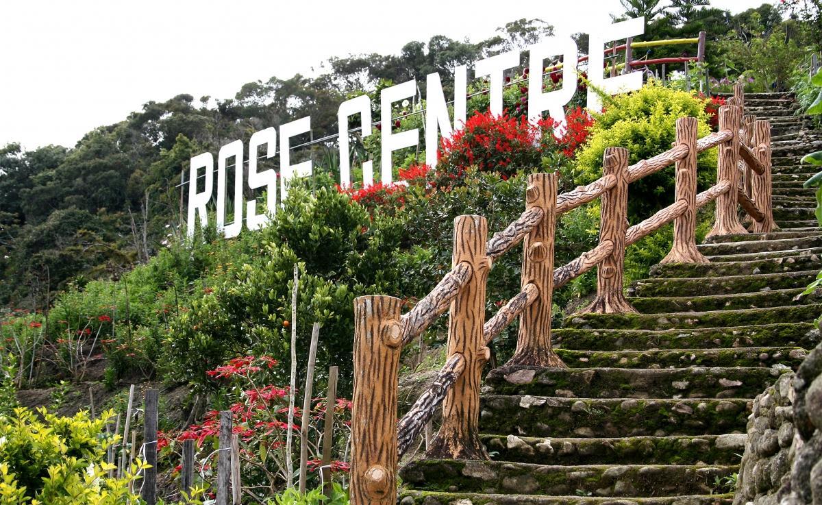 rose_centre.jpg